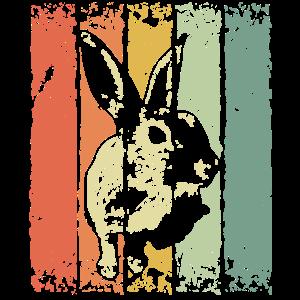 Hase Kaninchen Zwerghase Zwergkaninchen Haustier