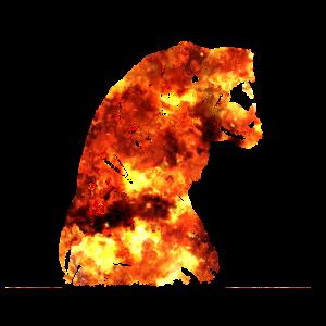 Feuer Tiger - feurig, heiß, brennend, Flammen