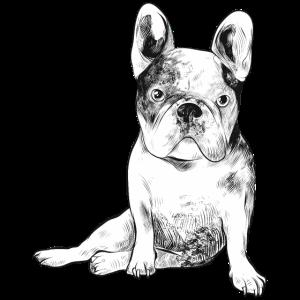 Französische Bulldogge wartet auf Herrchen Hund