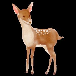 Reh Rehkitz Rehe Cartoon Zeichnung Wald Tier Tiere