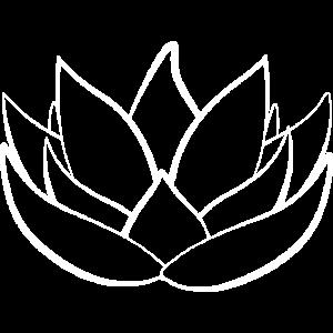 Lotusbluete weiss