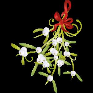 Misteln Mistelzweig Beeren Weihnachten Schleife