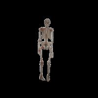 Skelett schlicht