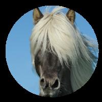 Pferde Kopf Pferdeschwanz Pferdesport Pferdehaare