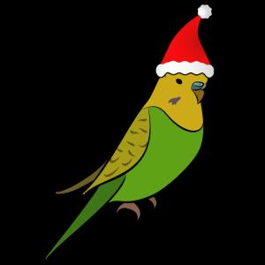 Wellensittich Muetze Geschenk Weihnachten Nikolaus