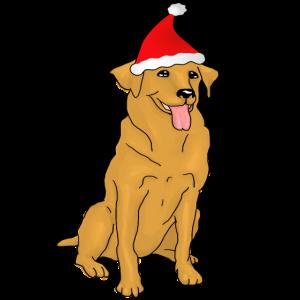 Hund Weihnachtsmann Muetze Weihnachten Nikolaus Ge