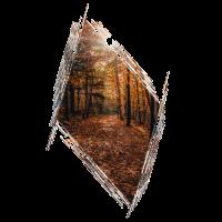 Herbst Wald Blaetter Laub Geschenk