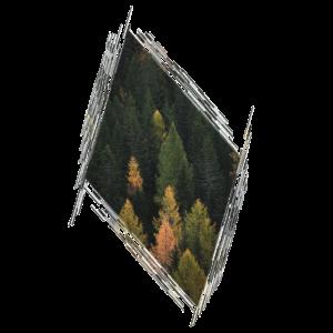 Wald Baeume Baum Natur Geschenk