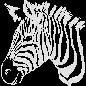 zebra light