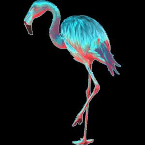 Miami Flamingo im retro look