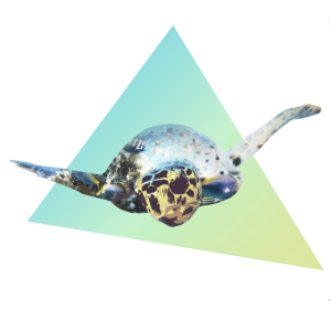 turtle doppelbelichtung