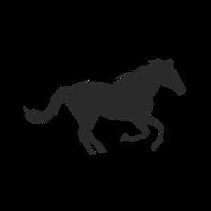 Pferde Sport