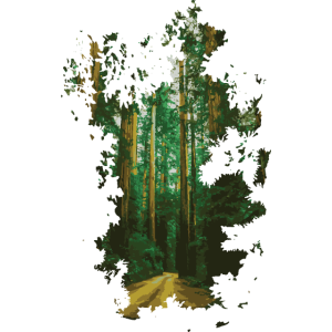 Neu Wald