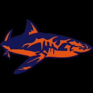 Hai Zeichnung Haifisch hai 8022