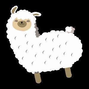 weißes Lama