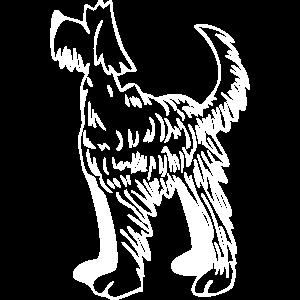 Langhaariger hund
