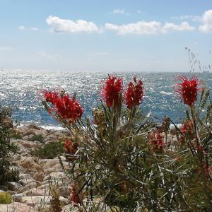Mallorca Blumen