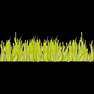 Gras grün Wiese Natur als Balkon zum mitnehmen