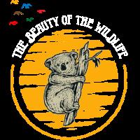 Koala Afrika Savanne Tiere Tierreich Wildnis