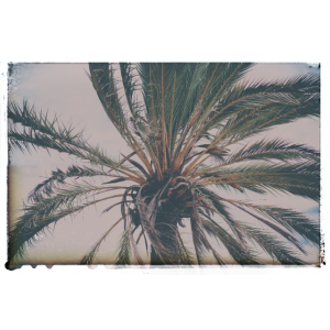 Analog Palm Beach