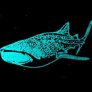 Tauchen Walhai Taucher Hai Wal Diving Scuba Dive