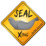 Traversée de phoques