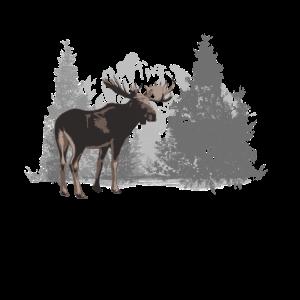 Canada - Moose - Kanada - Elch