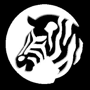 Zebra Safari