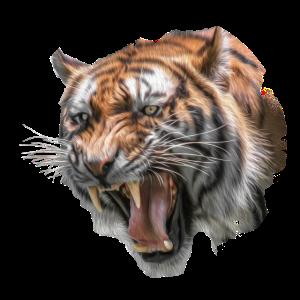 Tiger Grafik