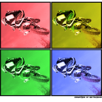 united_colors_of_motocross