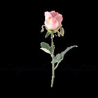 Rose, einfach dufte, Muttertag, Liebe, Blume