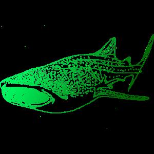 Tauchen Dive Taucher Walhai Hai Diving