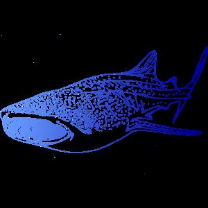 Walhai Tauchen Scuba Taucher Apnoe Urlaub Diving