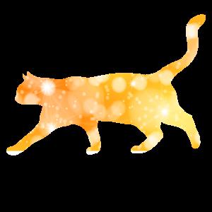Katze Mietzekatze Kaetzchen Miau