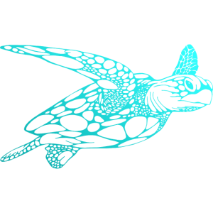 Schildkröte Tauchen Taucher Dive Diving Scuba