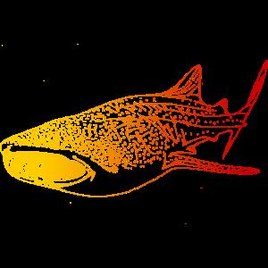 Walhai tauchen Taucher