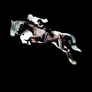 Pferd sprung Springpferd