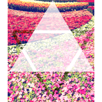 Flowertriangle