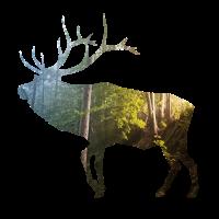 Hirsch im Wald mit Geweih