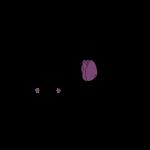 toolipani