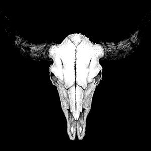 Büffel Schädel