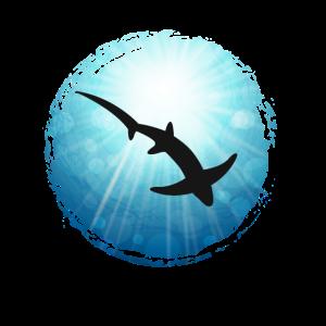 XASTY Fuchshai Schatten Tauchen Freitauchen Apnoe