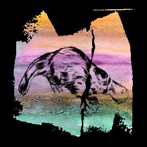 Platypus Schnabeltier