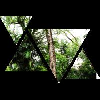 Wald   Natur   Dreieck   Geschenkidee