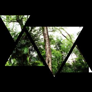 Wald | Natur | Dreieck | Geschenkidee