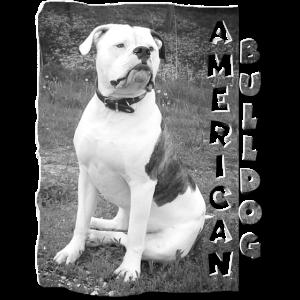 Amerikanische Bulldogge von Bercole Design