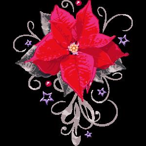 Weihnachtsstern Weihnachten Winter Blume