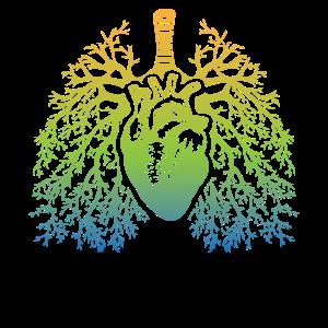 Herz, Lunge, Luftröhre - verzweigt