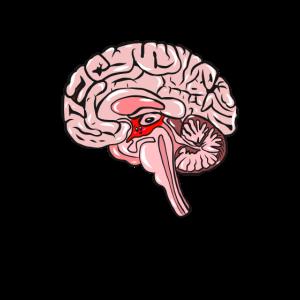 Wissenschaft Medizin Neurologie Gehirn