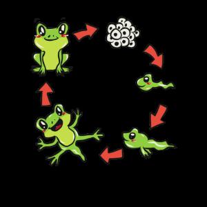 Wissenschaft Biologie Frosch